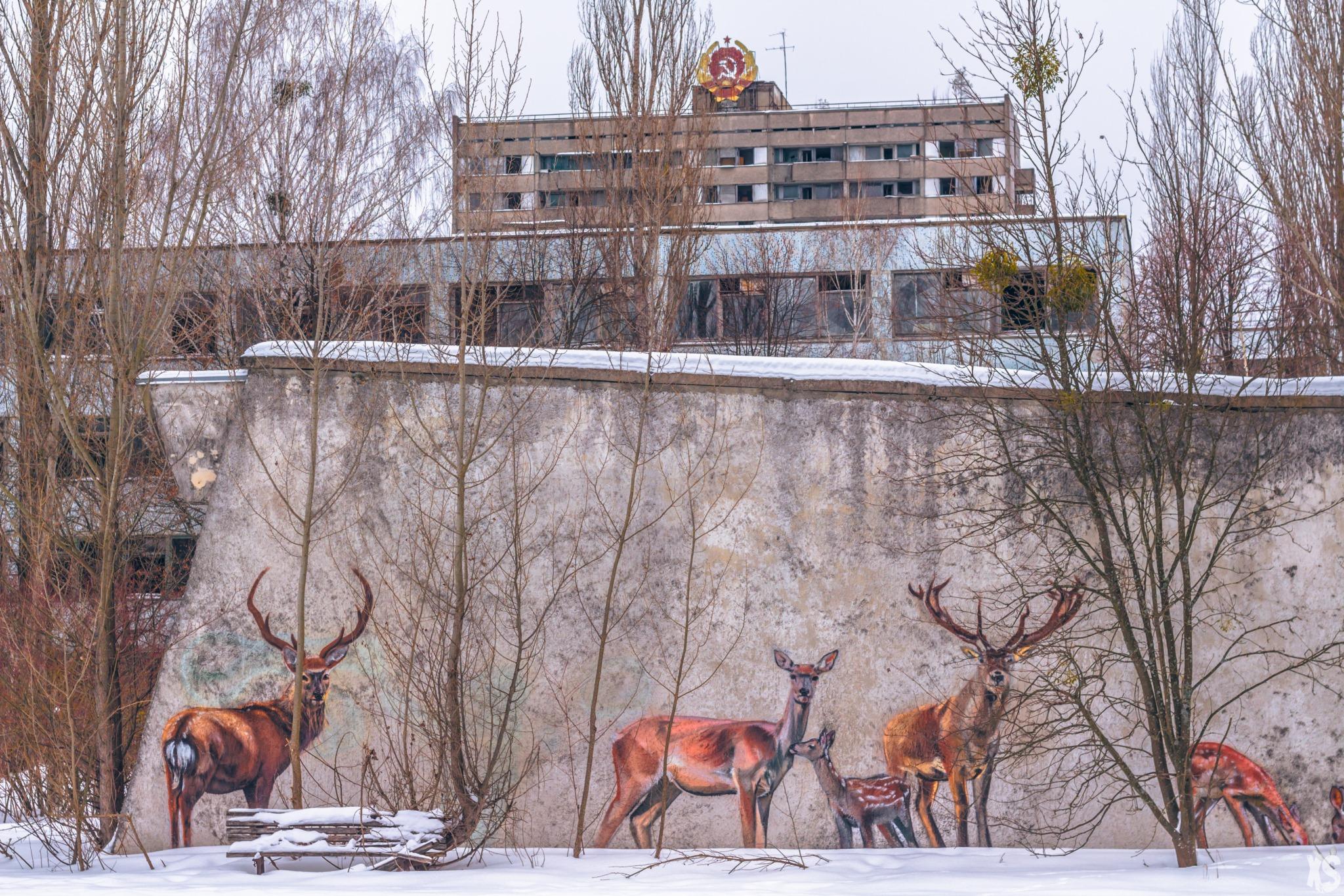 Visit Chernobyl and Pripyat