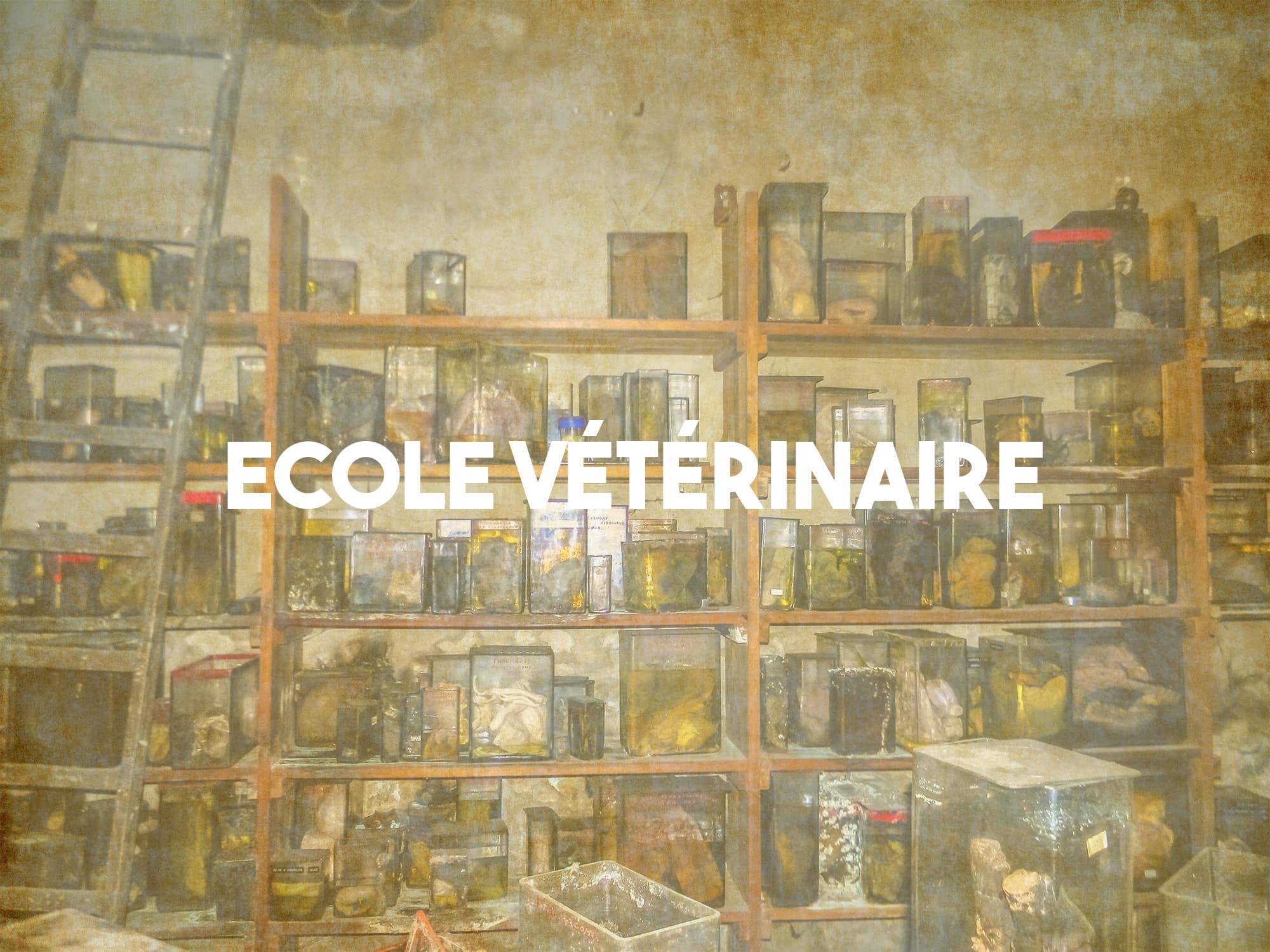 Ecole vétérinaire abandonnée située en Belgique | urbexsession.com/ecole-des-veterinaires-danderlecht-belgique | Urbex Belgique