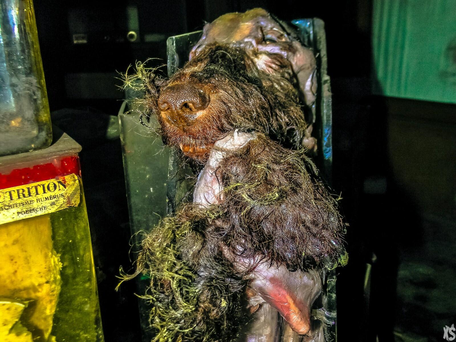 ecole-des-veterinaires-anderlecht-13