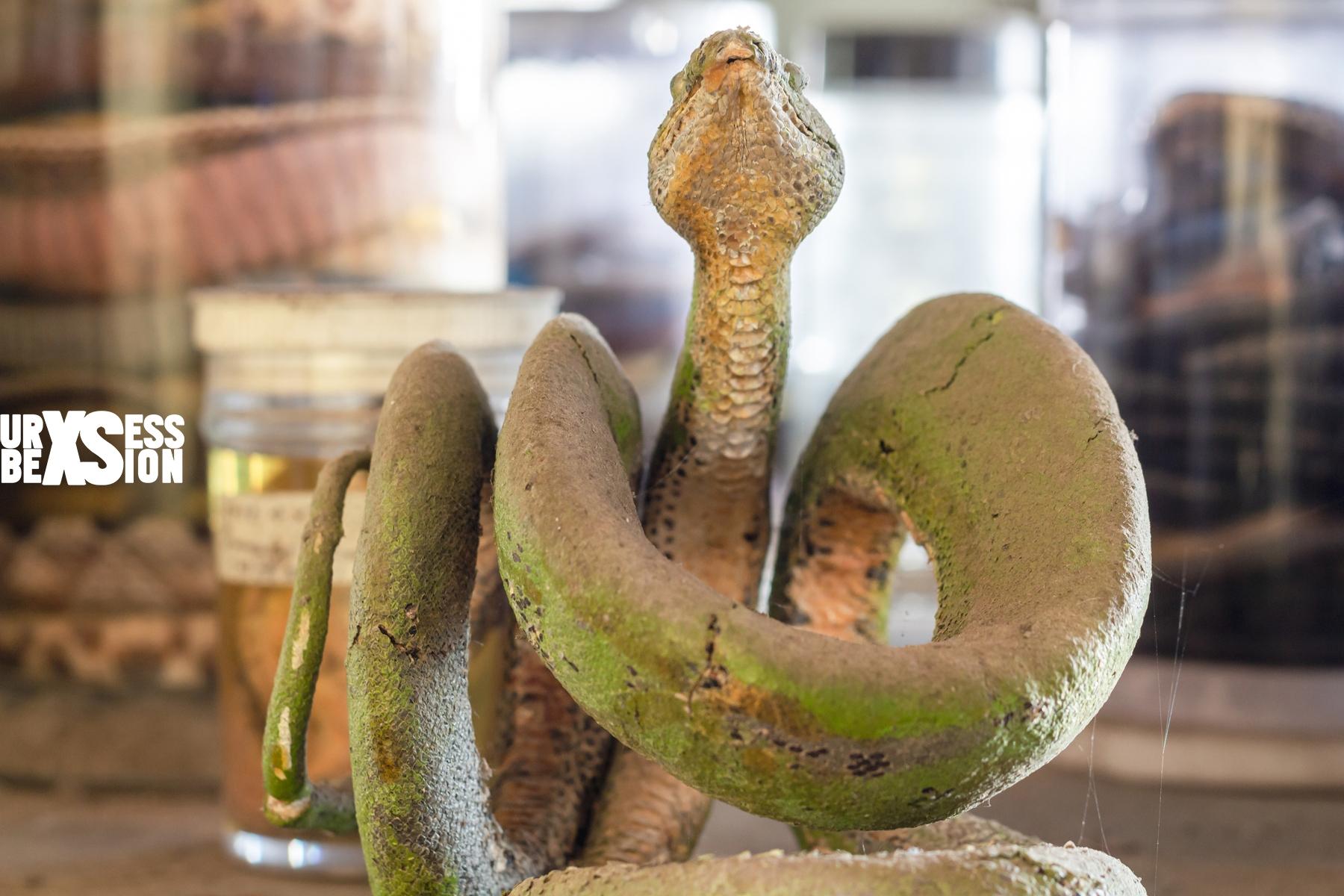laboratoire-serpents-11