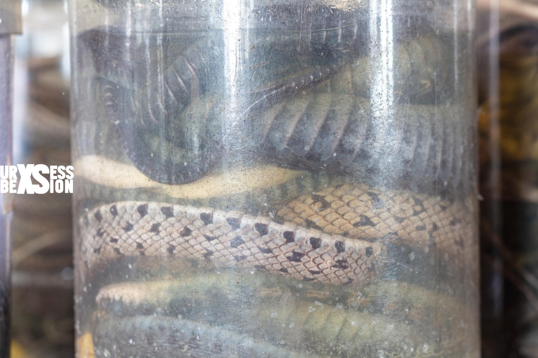 laboratoire-serpents-21