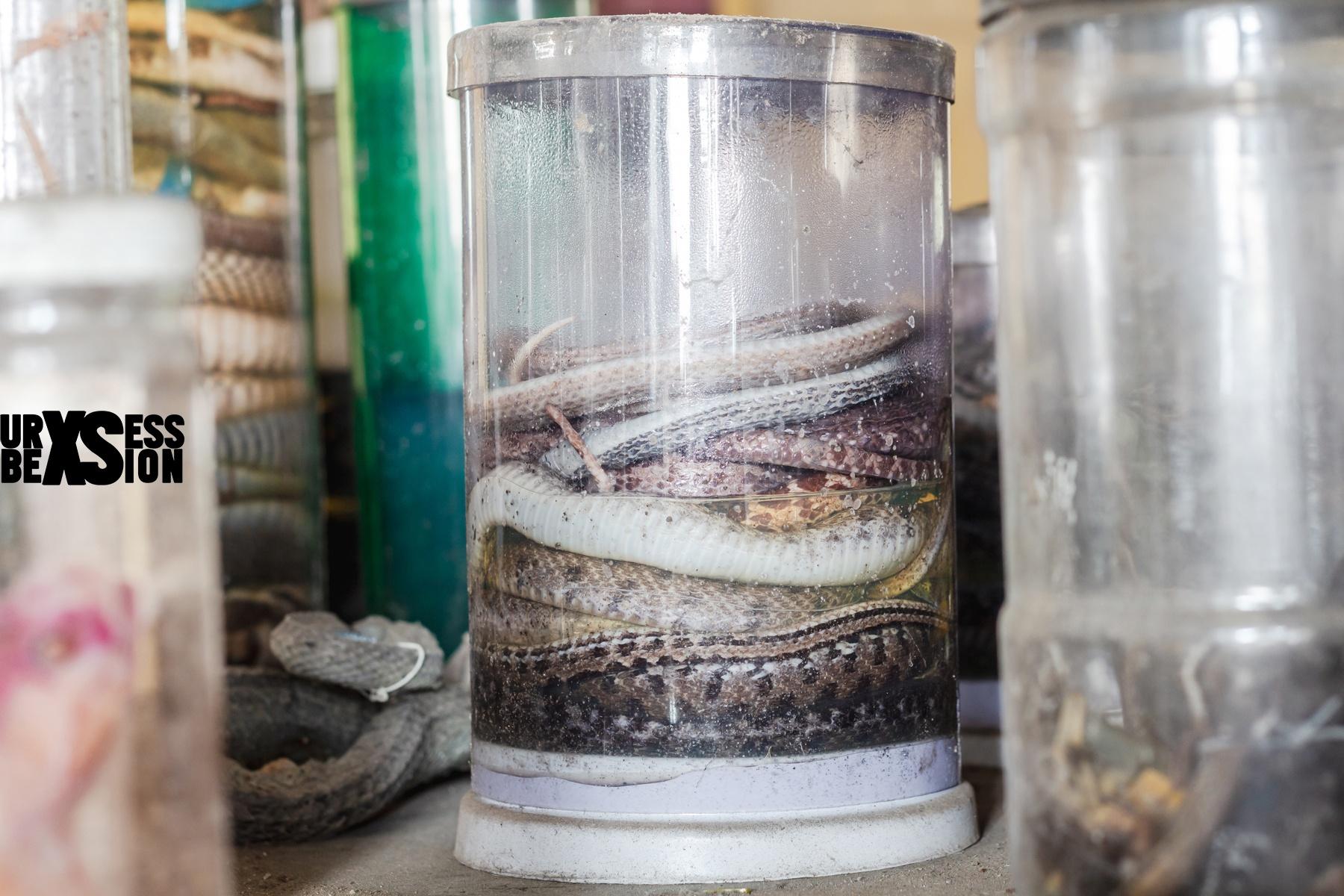 laboratoire-serpents-22