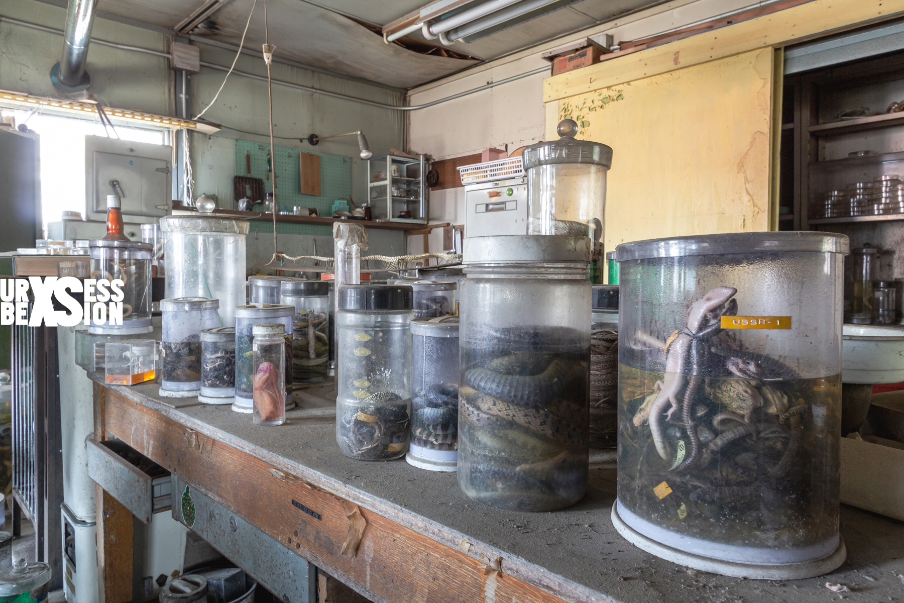 laboratoire-serpents-4