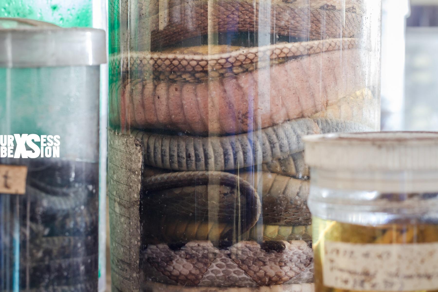 laboratoire-serpents-9